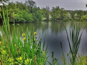 Albertson's Park