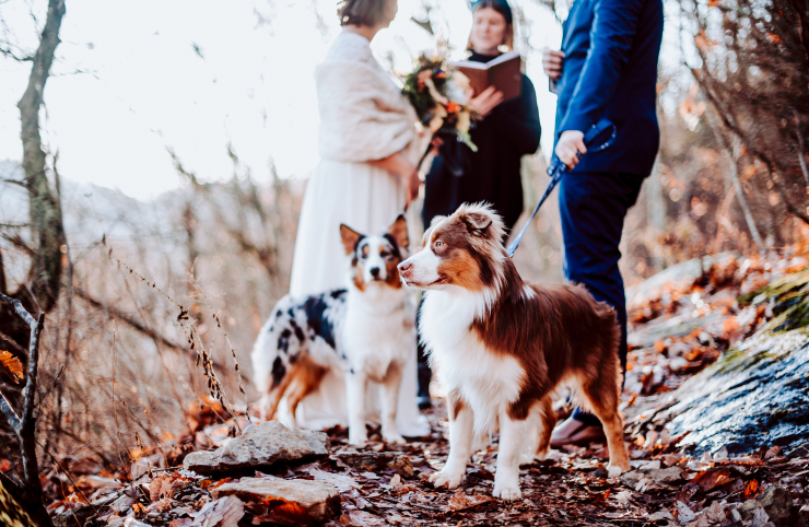 How To Include Your Pets Into Your Elopement: The Ultimate Guide