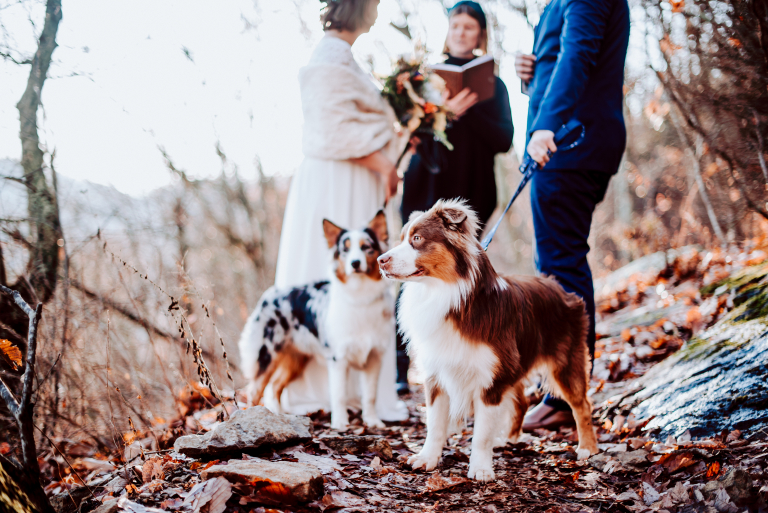 How To Include Your Dog Into Your Wedding